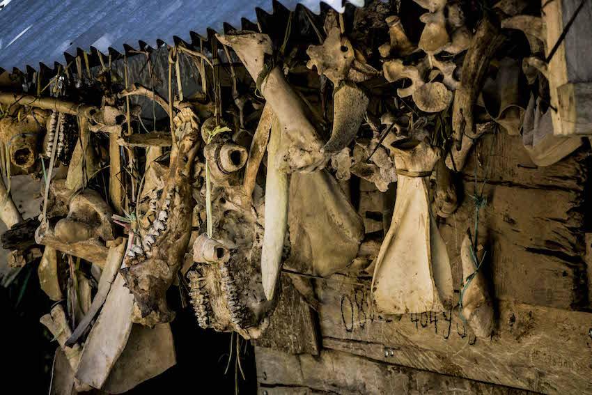 Pencucian, Pengeringan dan Pengasapan Tulang
